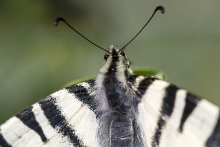 transmutation: Beautiful white butterfly sits on a tree branch. Stock Photo
