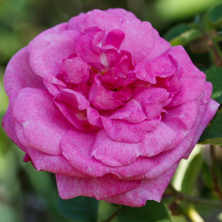 Photo of the beautiful flower. Stock Photo