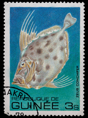 KRIVOY ROG, UKRAINE - JUNE 05, 2016: A stamp printed in Republic of Guinea shows fish, circa 1980