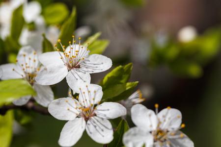 Beautiful macro photo of flower. Shallow depth of field.