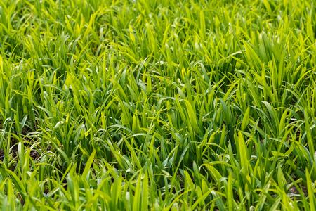 Photo lush green lawn in sunlight. Stock Photo