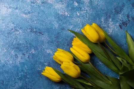 Tulips of different colors on a blue background.