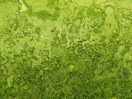 Background green rough texture with grass and rust