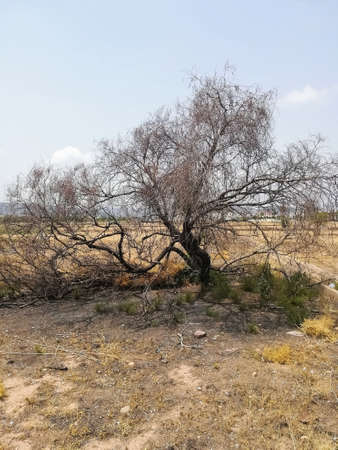 Burnt tree in a plot with little vegetation and lost of dry grass