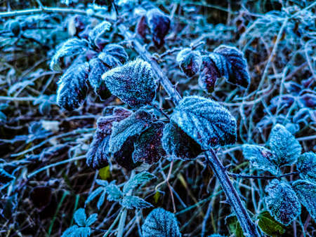 Mountain plants with hoarfrost of frozen dew water