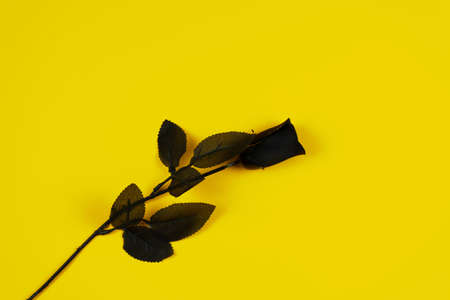 Black rose on yellow background, love concept Stockfoto