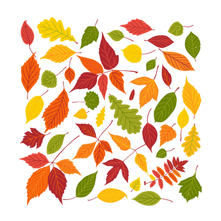 Set of bright autumn leaves. Vector illustration. Fall leaf square fill frame isolated on white background.
