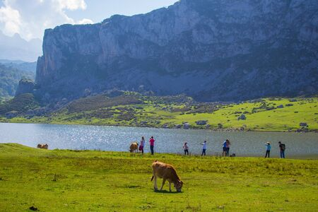 Beautiful view of Ercina Lake in Covadonga Lakes, Asturias, Spain. Green grassland with a cow pasturing and mountains at the background Stok Fotoğraf