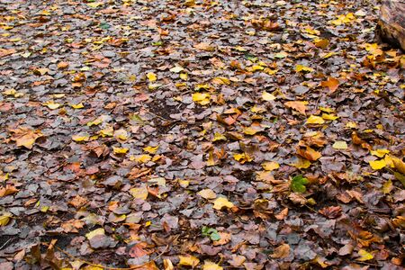 Leaves on the ground on a park in autumn. Beautiful seasonal wallpaper