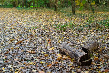 Small tree trunk on a ground full of colorful leaves in a park during autumn 写真素材