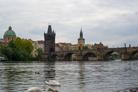 Goose at the riverside of Vltava river with Charles Bridge (Karlův most) and Old Town Bridge Tower (Staroměstská mostecká věž) at the background, in Prague, Czech Republic