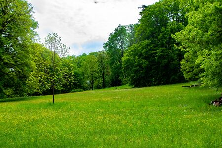 Meadow with green grass and trees in Zamecky Park (Hluboka nad Vltavou, Czech Republic) during spring season