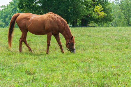 Horse on a Kentucky horse farm