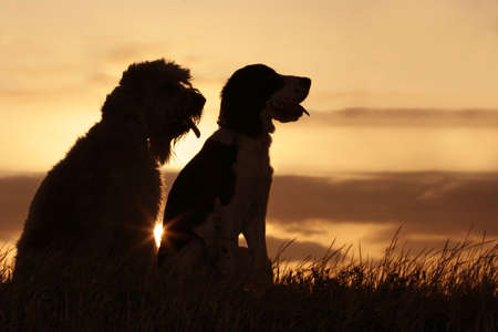 2 dogs at sunset photo