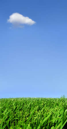 Background of sky and grass Stock Photo - 220822