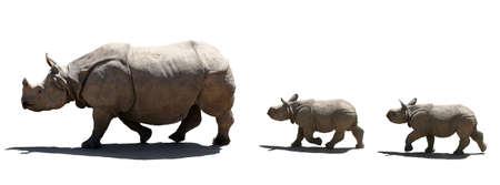 Rhino family isolated photo