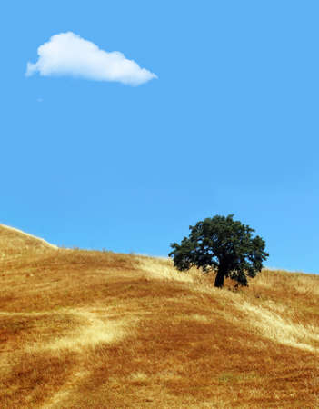 Lonely tree and cloud Stock Photo