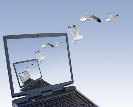 microcomputer: Freedom