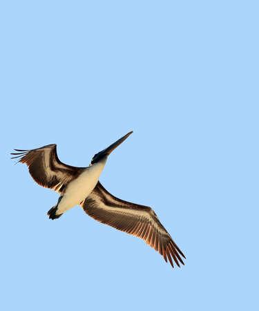 lightness: Bird in flight