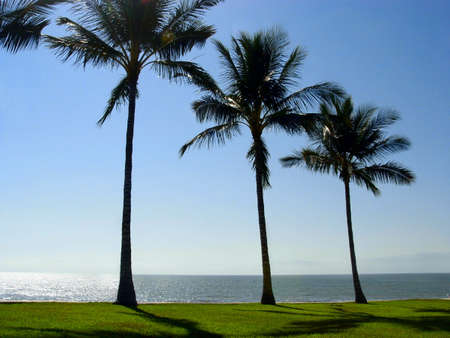 Three palm trees at the beach