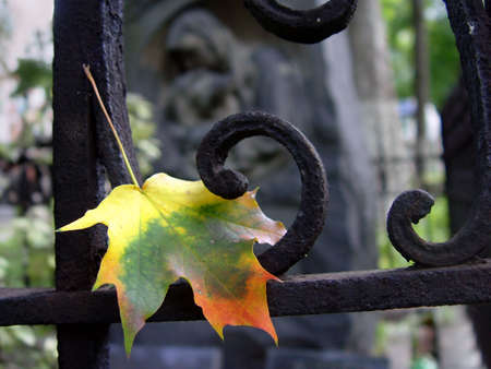 Autumn leaf at the cemetery photo