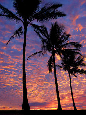 3 palm trees on the beach at sunset Stock Photo - 356021