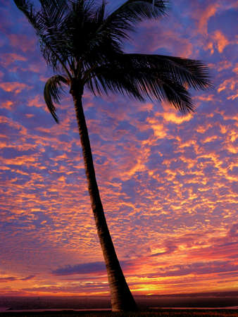 Palm tree on the beach at sunset Stock Photo - 359393