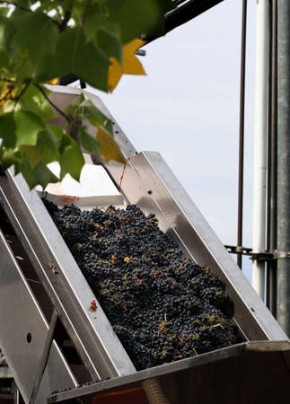 sonoma: Wine making process