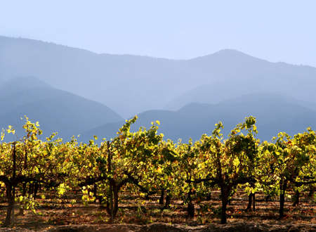 Autumn grape leaves at California winery with mountains on the background Stock Photo