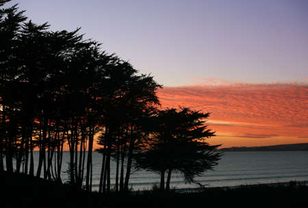 Trees on a beach at a sunset photo