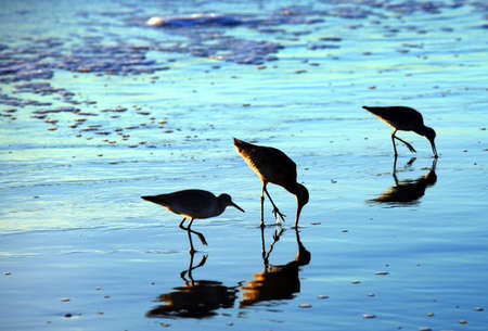 Three birds and their reflections on the beach photo