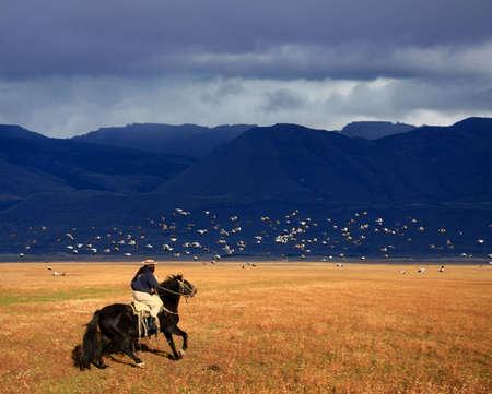 パタゴニア、アルゼンチンで彼の馬に乗ってガウチョ