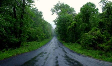 森の中の濡れた道路。 写真素材 - 7149567