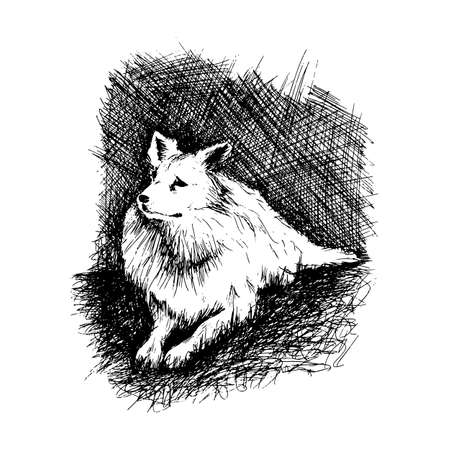 dog pen: Vector dog in anddrawn engraving style by pen, retro hound