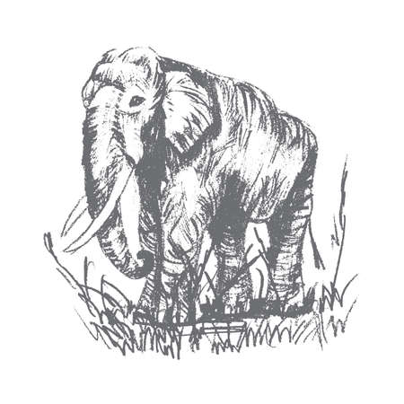 scetch: Vector engraving elephant, elephant scetch
