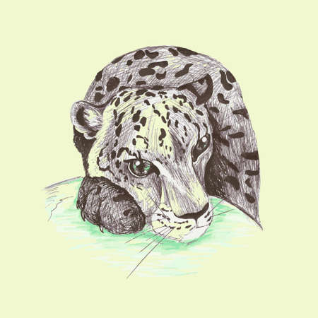 snow leopard: Wild cat, irbis, leopard, snow bars scetches in vector