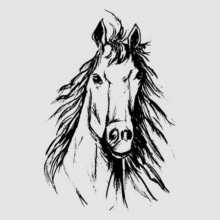 Horse scetch by black pencils in eps