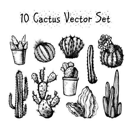 Hand Drawn Isolated Cactuses Set. Cactus in vintage style for textiles, print and etching. Line-art. Vector