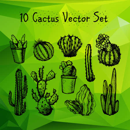 thorn bush: Hand Drawn Isolated Cactuses Set. Cactus in vintage style for textiles, print and etching. Line-art. Vector