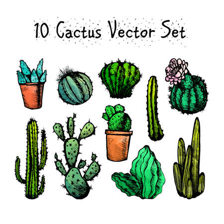 cactus flower: Hand Drawn Isolated Cactuses Set. Cactus in vintage style for textiles, print and etching. Line-art. Vector