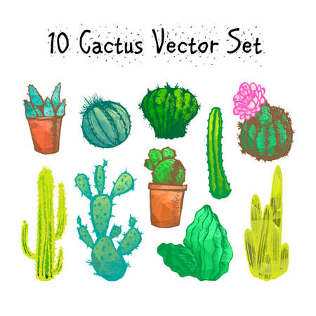 cactus botany: Hand Drawn Isolated Cactuses Set. Cactus in vintage style for textiles, print and etching. Line-art. Vector