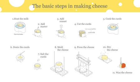 Illustration of the process of cheese production. Cooking cheese instructions. Illustration