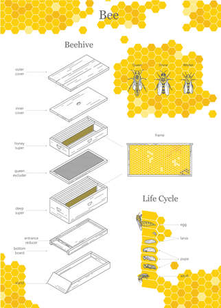 Beehive illustration, bee. Big infographic print Stock Illustratie