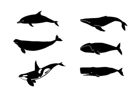 Whales for laser cutting.