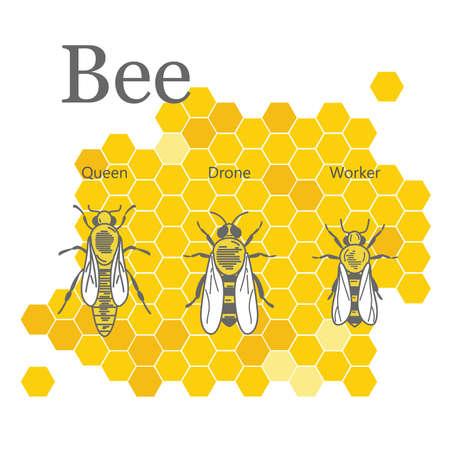 Image scientifique des abeilles sur les nids d'abeilles