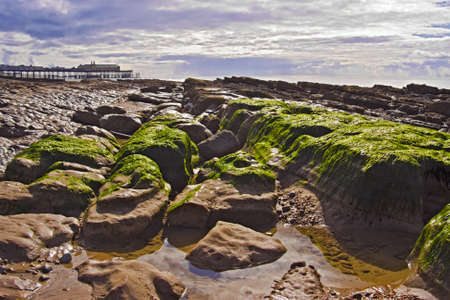 Hastings, United Kingdom - April 2009: Low tide uncovering algae on rocky surface, with Hastings Victorian Pier in background before the fire