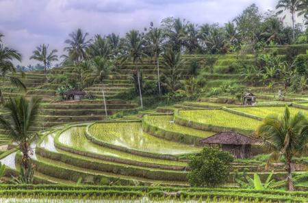 rizsföldek Jatiluwih, Bali, Indonesia