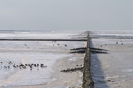 Fagyasztott hullámtörő merőleges minta tengeri madarak felsorolt Watt-tenger, Hollandia