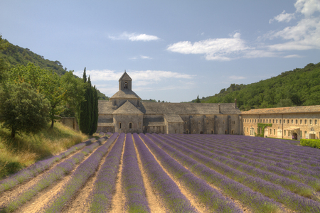 Purple lavender fields in front of the medieval Senanque abbey, a Cistercian abbey near Gordes in Provence, France Editorial