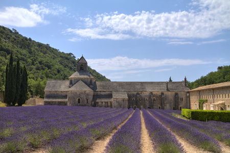 herbs of provence: Purple lavender fields in front of the medieval Senanque abbey, a Cistercian abbey near Gordes in Provence, France Editorial